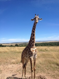 An Intern Abroad: Kenya